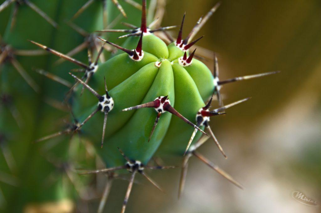 Makrofotografie - Kaktus
