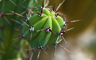 Makrofotografie – Kaktus